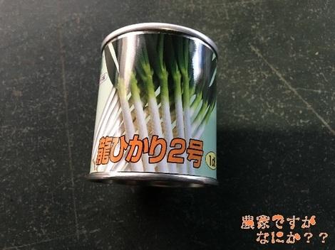 20180327長ねぎ播種 龍ひかり.jpg