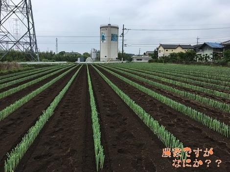 20180619新井4.jpg