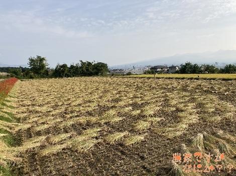 20201005稲刈り.jpg