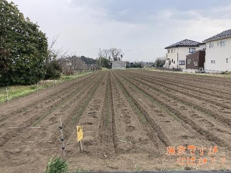 20210326新井3.jpg