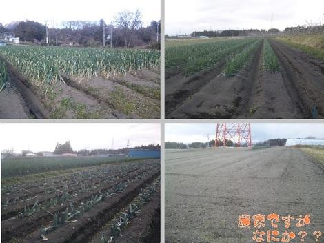 20120103 畑の様子2.jpg