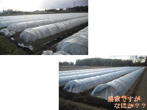 20120103 畑の様子4.jpg