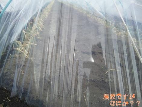 20120209 トンネルねぎ 法人.jpg